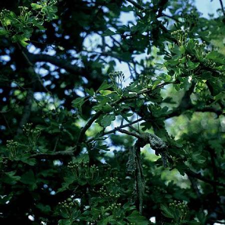 The Rag Tree Series